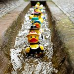 Rubber ducks floating in a road drain